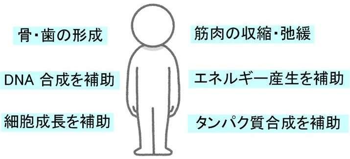 イライラするのはマグネシウム不足が原因?:達人に訊け!:中日新聞Web